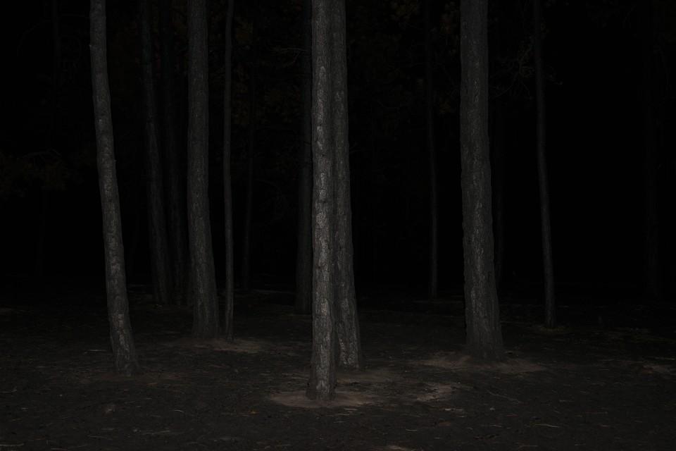 Becoming Wilderness VII, 2013